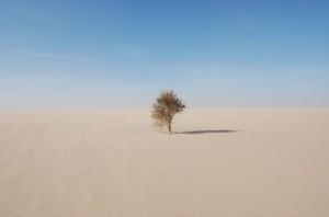 wfoto pagina ext world mauritania_min